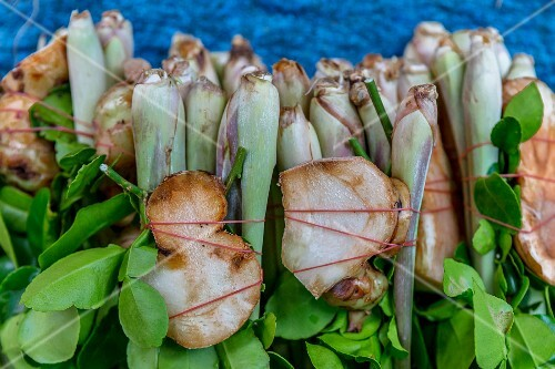 Bunches of galangal, kaffir limes and lemongrass as soup ingredients (Thailand)