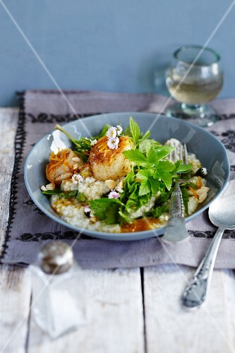 Barley risotto with ground elder and scallops