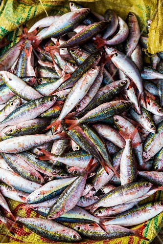 Fresh fish in a plastic sack