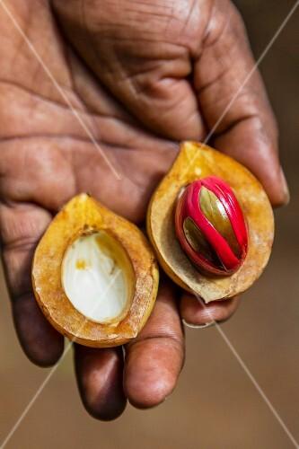 A fresh nutmeg with a nutmeg flower