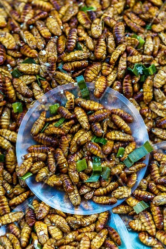 Fried silkworm larvae (Udon Thani, North-East Thailand)