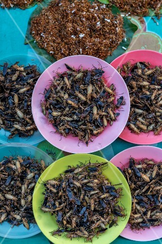 Fried grasshoppers at a street market (Udon Thani, North-East Thailand)