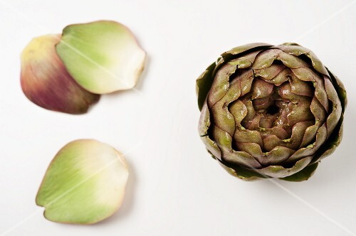An artichoke and leaves