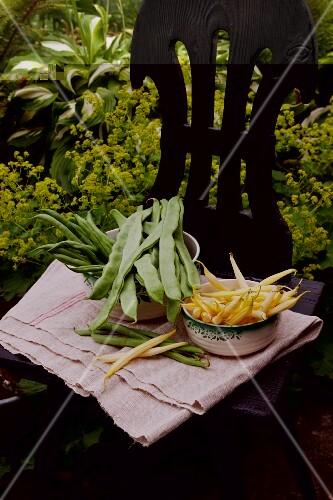 Bush beans, wax beans and green beans