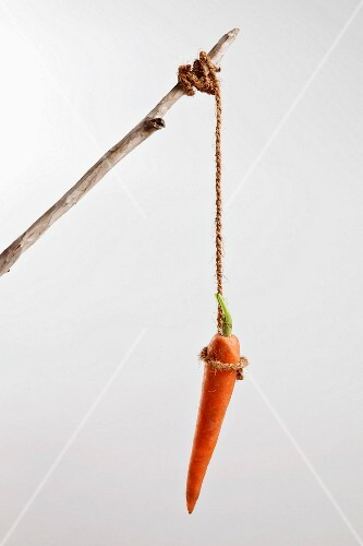 A carrot hanging on a string