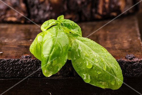 Freshly washed basil on a wooden crate