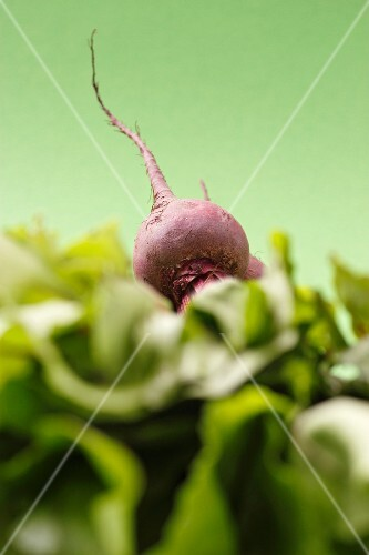 A beetroot on top of leaves