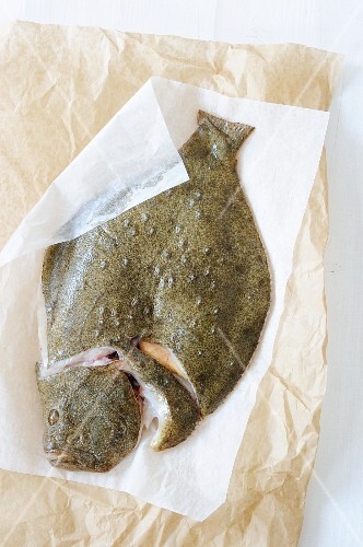 A fresh turbot on a piece of paper