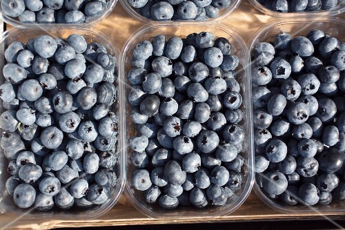 Blueberries in plastic punnets