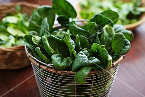 Fresh young spinach in sieve
