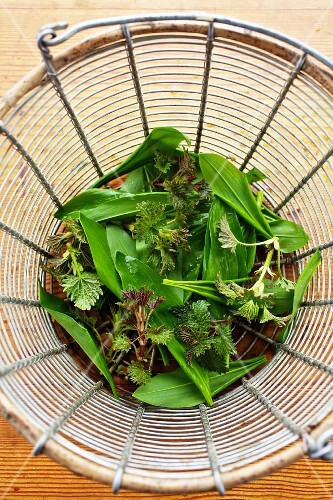 Young stinging nettles and wild garlic in a sieve
