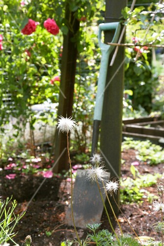 A garden spade in a flower bed