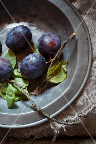 Plums with twigs and leaves on an old metal plate