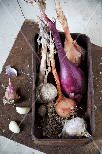 Freshly harvested garlic and onions in an old box