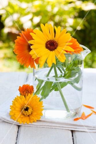 Pot marigolds (Calendula officinalis) in glass jug on garden table