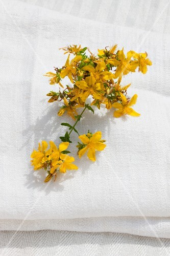 Flowering St John's Wort on a linen cloth outside