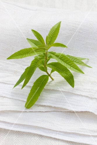 A sprig of verbena on a linen cloth outside