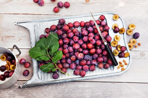 Freshly harvested damsons on an old washboard on a wooden table