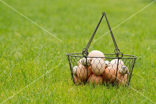 Chickens eggs and quails eggs in a wire basket in a meadow