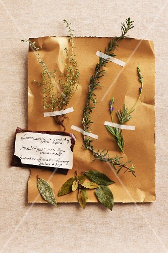 Various types of herbs on a piece of paper