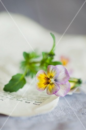 Viola on book page