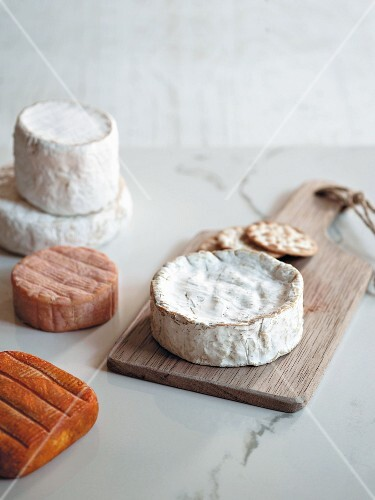 Various types of soft cheese with crackers