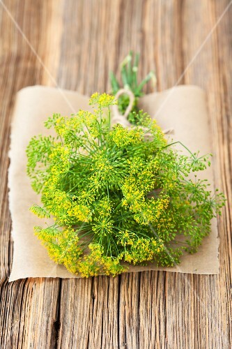A bunch of fresh, organic dill