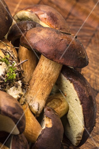 Fresh bay boletes on a wooden board