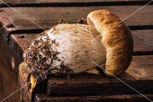 A fresh porcini mushroom on a wooden crate