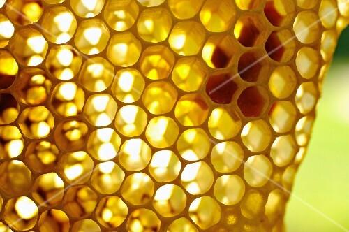 A honeycomb (close-up)