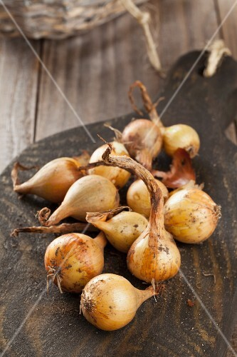 Freshly harvested pearl onions on a wooden board