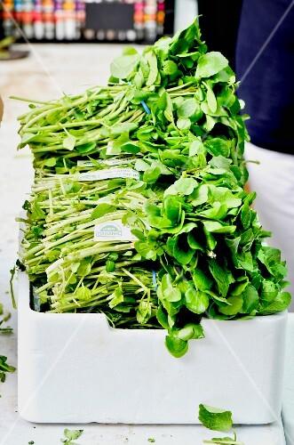 Fresh, organic watercress in a box