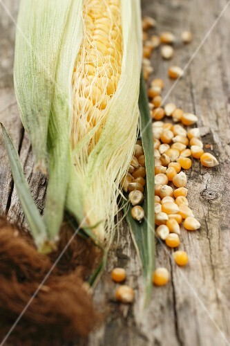 A corn cob and corn kernels on a wooden surface