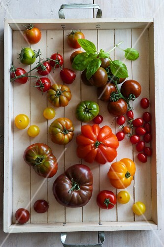 Various tomatoes on a tray