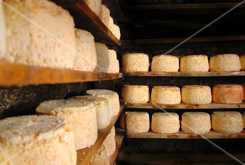Montafoner cheese in a cellar