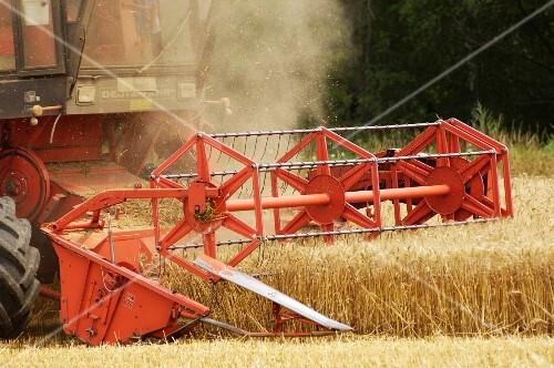 A combine harvester in a wheat field (wine growing region, Austria)