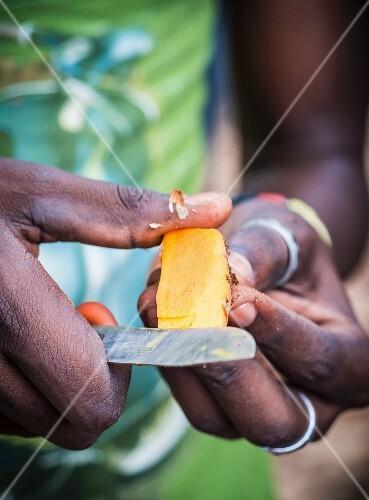 A person cutting tumeric root on a spice plantation (Zanzibar)