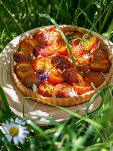 Apricot tart in a field