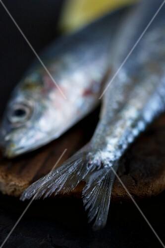 Fresh sardines (detail)