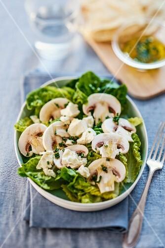 Mixed leaf salad with mushrooms