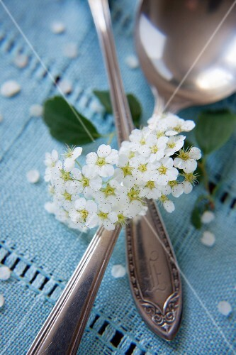 An antique spoon and blossom on turquoise fabric