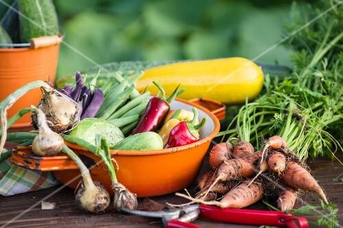Early summer vegetable harvest in a garden