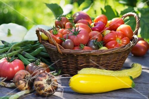 A high summer vegetable harvest in a garden
