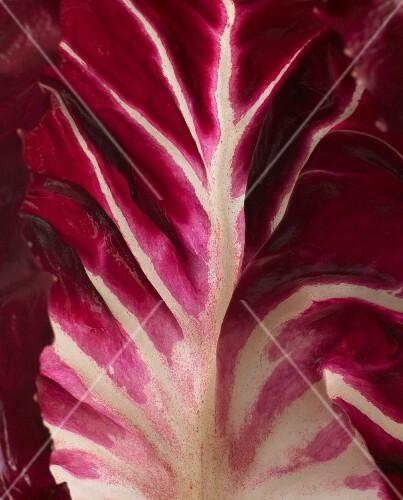 A radicchio leaf (close-up)