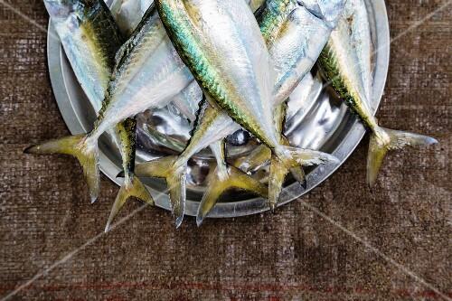 A bucket of fresh fish at a market
