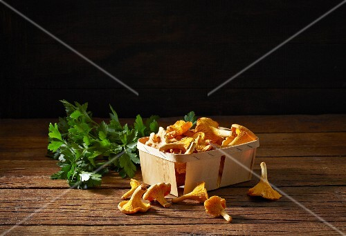 Fresh chanterelle mushrooms in a wooden basket with parsley