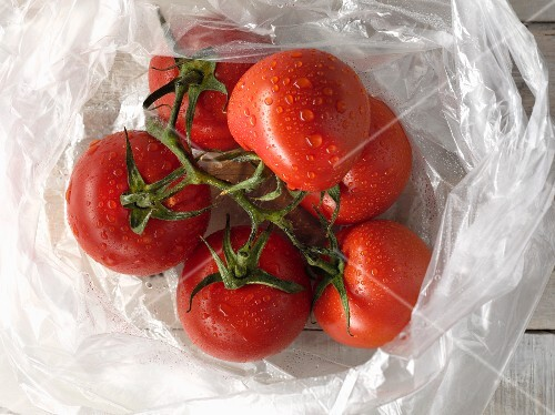 Freshly washed vine tomatoes in a plastic bag