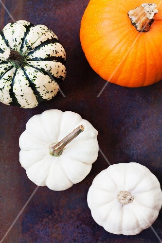 Various types of pumpkin and squash on a rusty metal surface