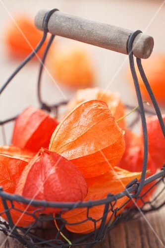 Wire basket of physalis husks on wooden surface