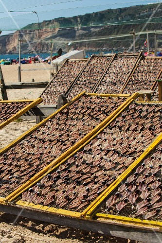 Fish drying on racks on a beach